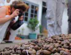 kacang mete gelondongan