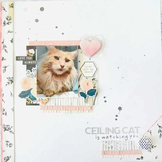 layout-ceiling-cat01