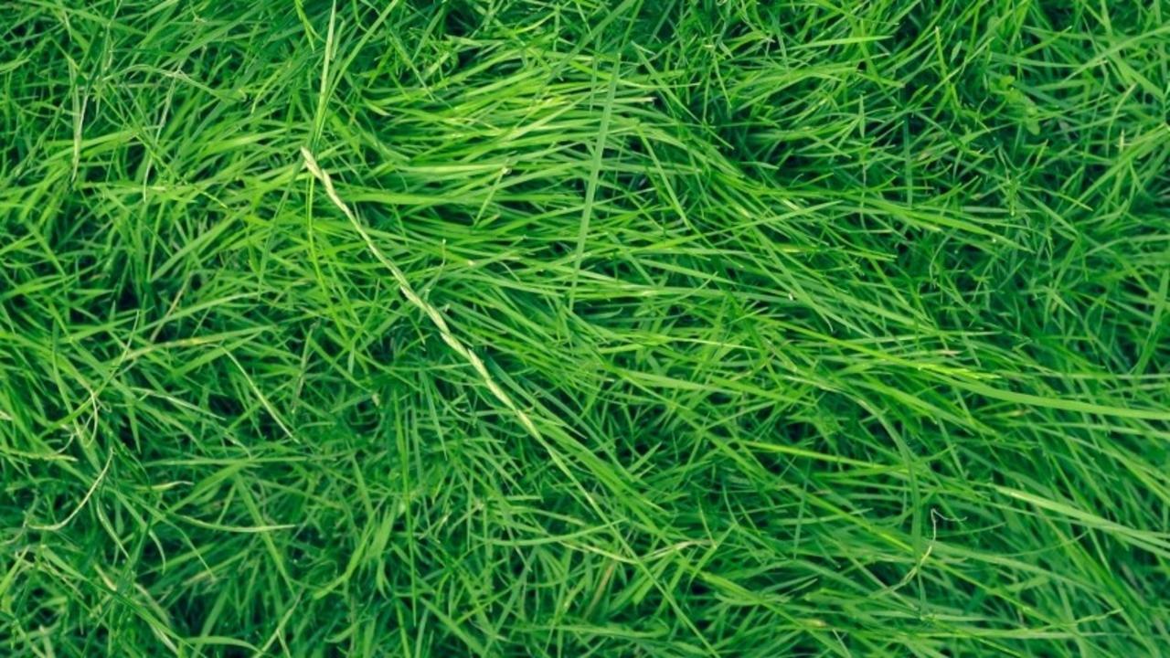 State Ibe9a3artueezv2tab4k Drought Tolerant Grass Lawn Mower Uc Verde Buffalo Grass Near Me Uc Verde Buffalo Grass Rabbits houzz-02 Uc Verde Buffalo Grass