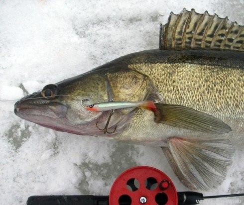 Зимняя рыбалка как правильно пользоватся балансиром