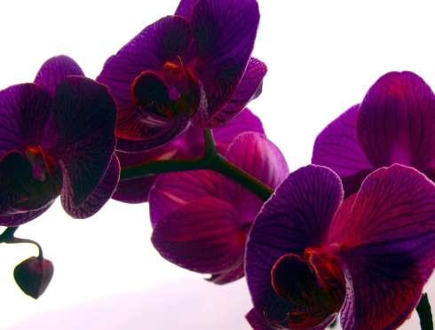 Как правильно посадить орхидею дома?