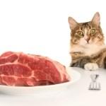 Как правильно кормить кошку?
