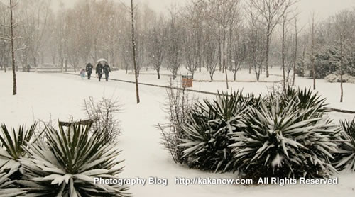Beautiful spring snow, March in China Beijing Zoo. Photo by KaKa.