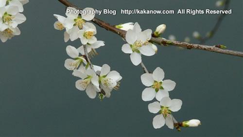 The spring of Beijing Yiheyuan, China. Photo by KaKa.