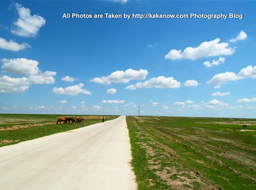 China travel, Inner Mongolia, Horqin Prairie, horses. Photo by KaKa.