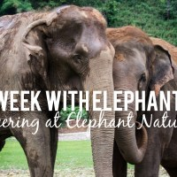 A Week With Elephants: Volunteering at Elephant Nature Park