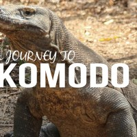 Mother of Dragons: A Journey To Komodo Island