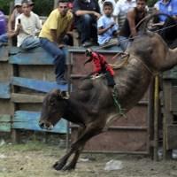 Верхом на быке