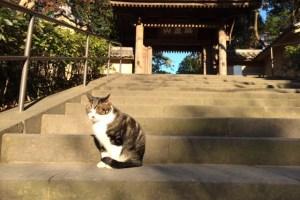 円覚寺猫(美樹)