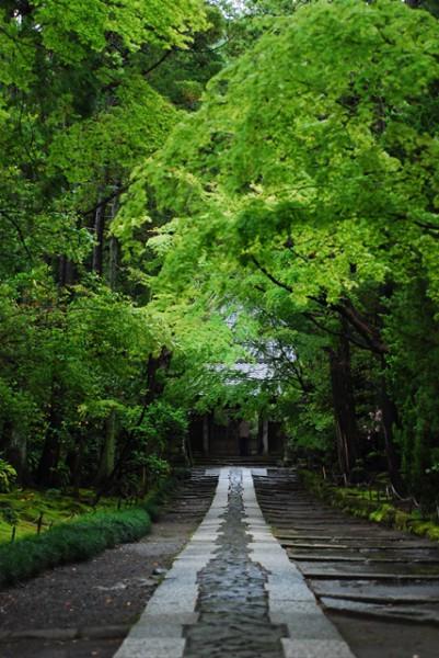 雨こそ鎌倉(山田一司)