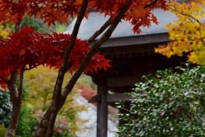 nana_海蔵寺の朝31