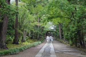 鎌倉夏の雨の後5maruchan