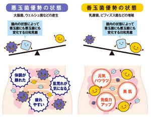 善玉菌と悪玉菌.png