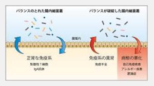 腸内細菌と免疫.png
