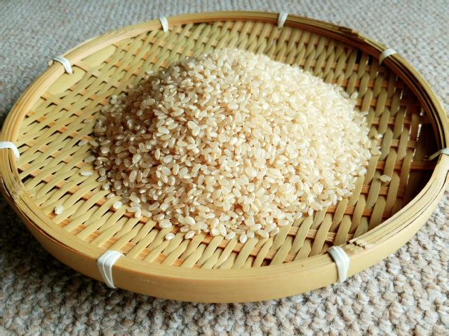 神の黄金米