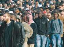 Bevándorlófrász