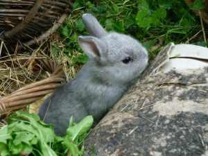Kaninchen Krankheiten