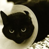 Injured Cat with Collar
