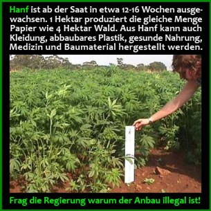 Hemp_illegal_german