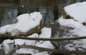tierpark sababurg zoo