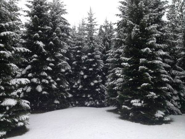 It's beginning to look a lot like Plitvice...