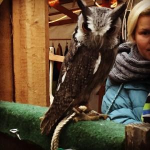 medieval weihnachtsmarkt castle schonseerland owl