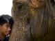 elephant-polo1