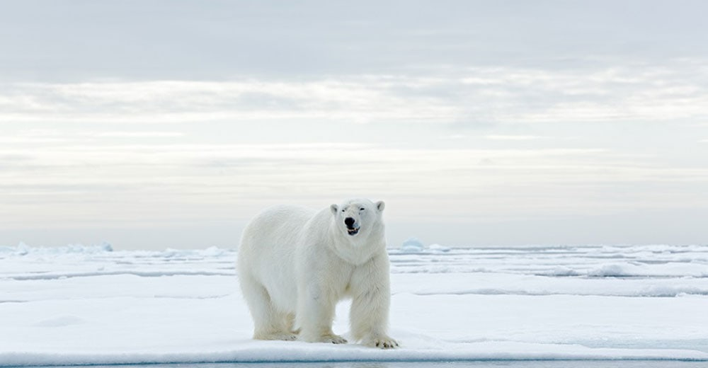 The Ultimate Bucket List Your Top Guide To Selling The Arctic