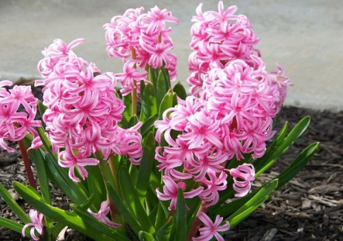 flowers-13503_640