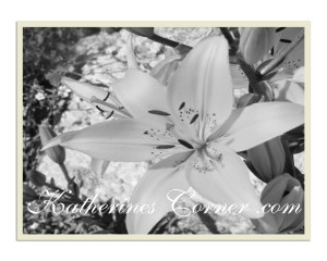 Wordless Wednesday Lilies In The Garden