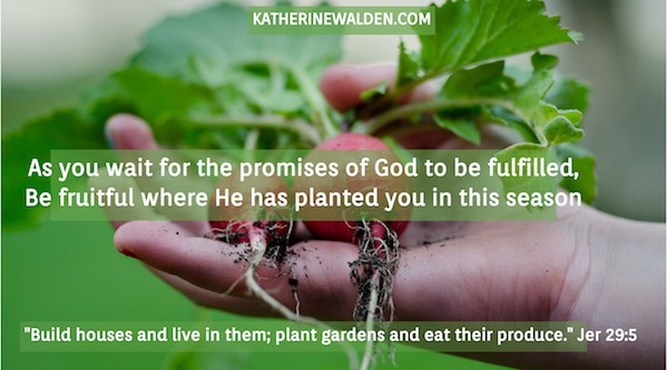Jer 29:4 -'Build houses and live in them; plant gardens and eat their produce.' As you wait for the promises of God to be fulfilled, be fruitful where He has planted you in this waiting season