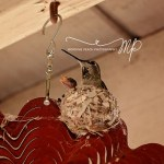 Baby Hummingbird Photos