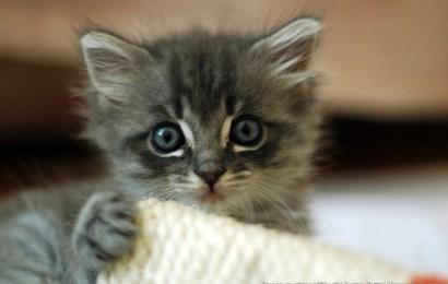 Kattenavn til hannkatt