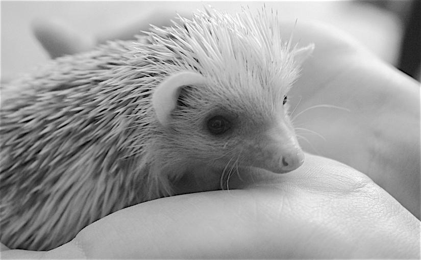 WORDJelly 4 – Hedgehog
