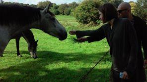 horses - Copy