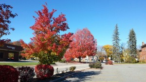 Keene's Fall Colors, as of Friday!