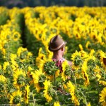 Go Out and Visit a Sunflower Farm