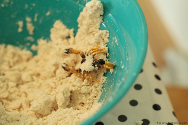 desert dough8