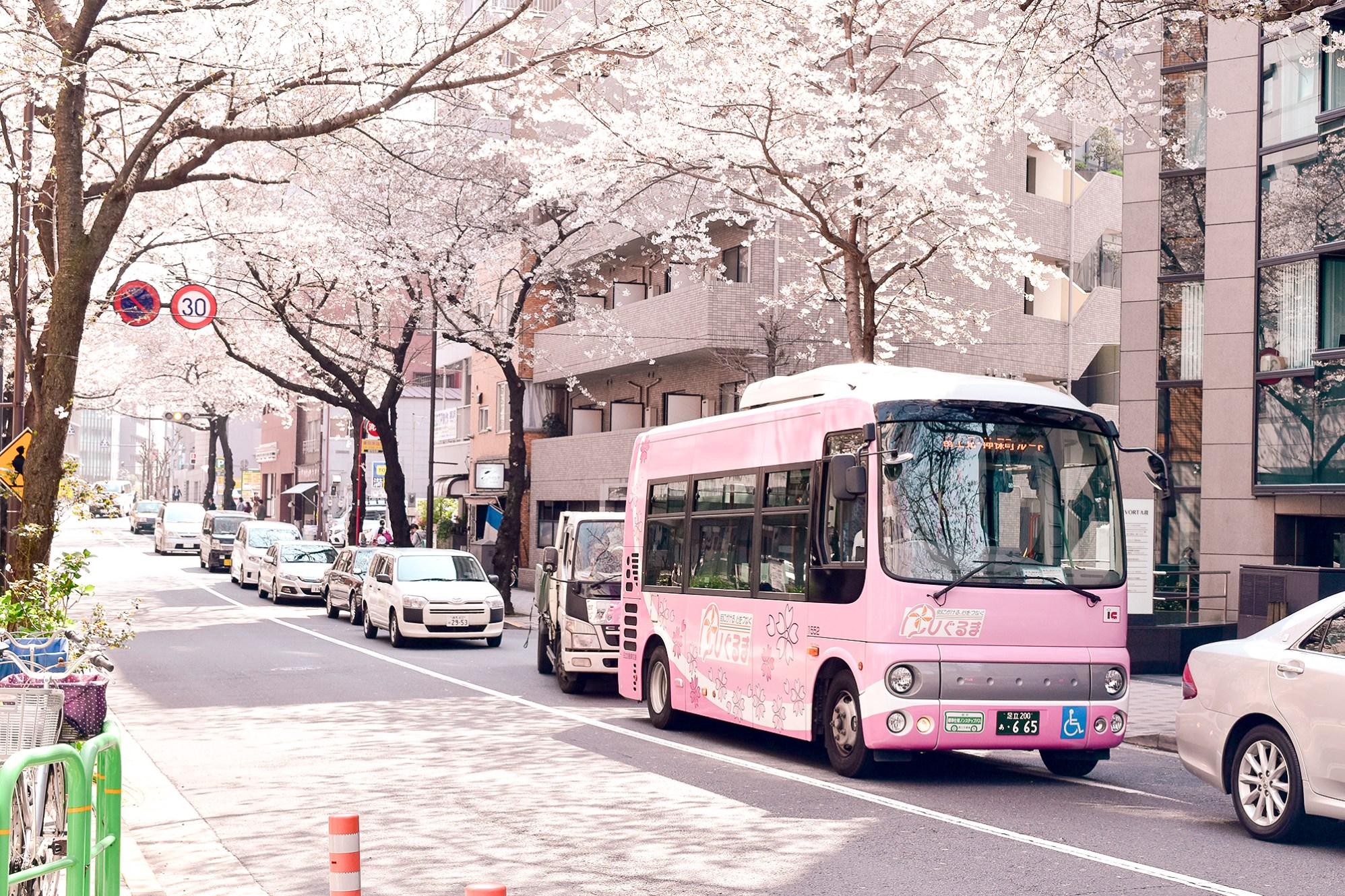 Sakura bus amongst the sakura