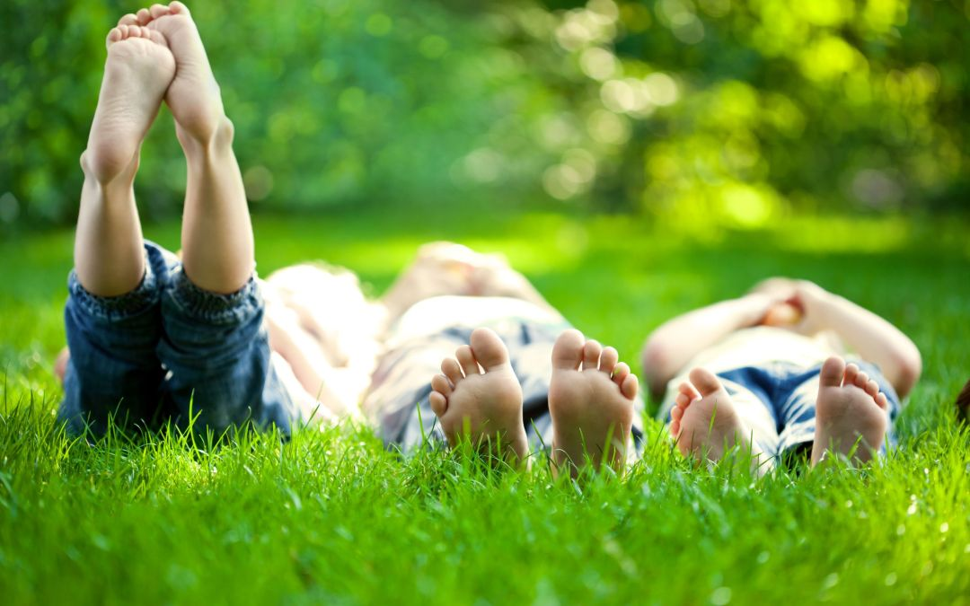 Give Your Yard a Summer Makeover With Professional Lawn Care Services