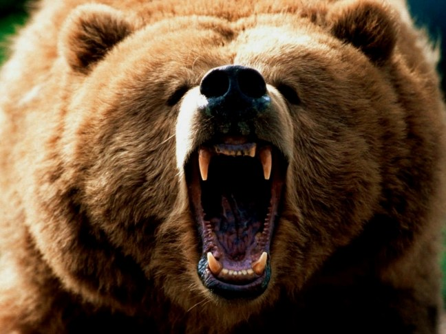 Grizzly-Bear-3