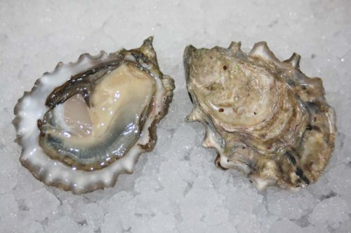 Chefs Creek Oysters
