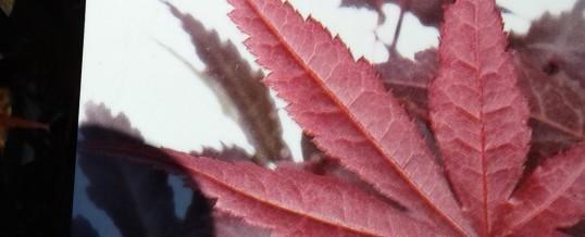 Какви растения са подходящи за засяване през есенните месеци