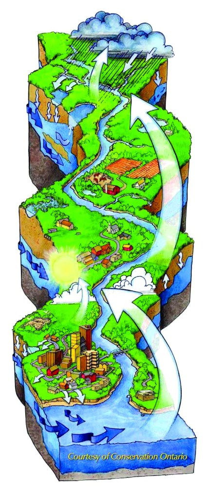 The water cycle and the watershed. Courtesy Conservation Ontario.