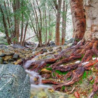 Mt-Baldy-Landscape-Kevin-Kowalewski-2