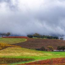 Vineyard-Sonoma-Landscape-Kevin-Kowalewski-3