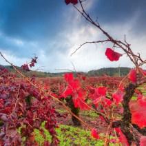 Vineyard-Sonoma-Landscape-Kevin-Kowalewski-4