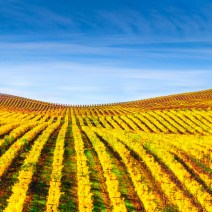 Vineyard-Sonoma-Landscape-Kevin-Kowalewski-6