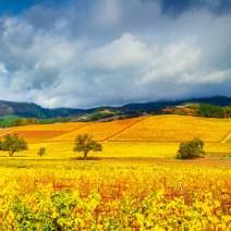 Vineyard-Sonoma-Landscape-Kevin-Kowalewski-7