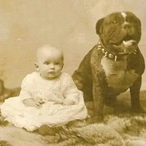 Pit Bulls Children-Interesting Facts About Dogs
